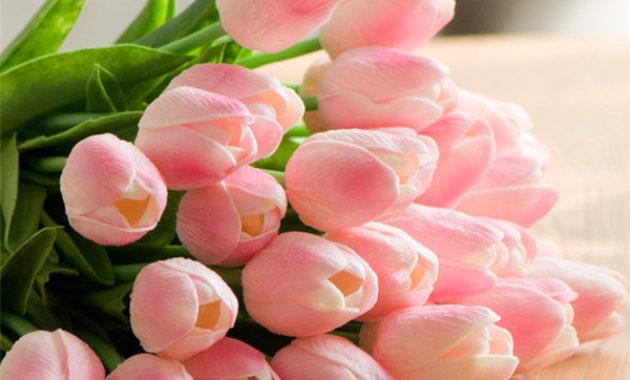 Pink Tulips flower