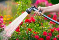 watering rose garden